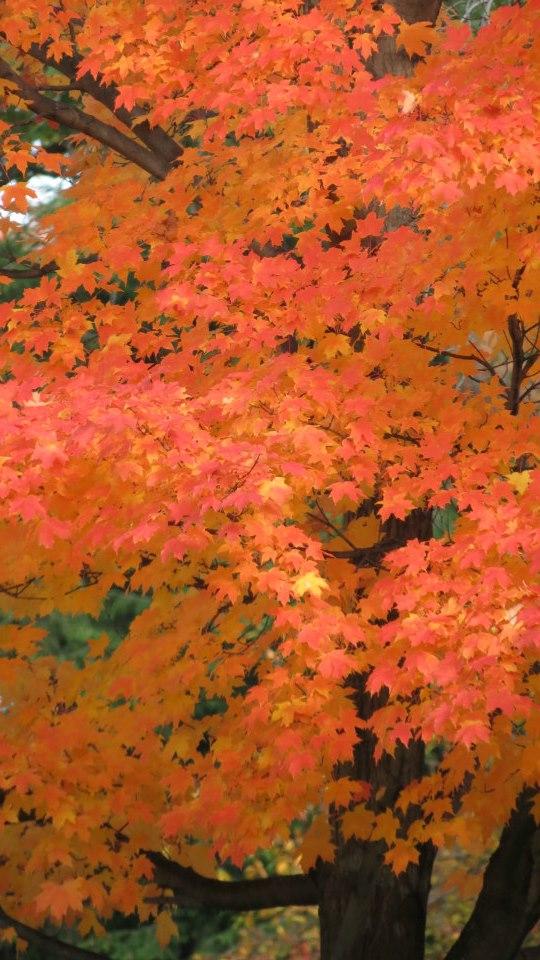 Section 14 - Fall Foliage