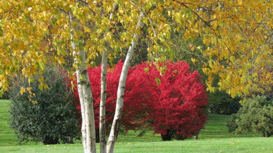 Section 11 - Fall Foliage