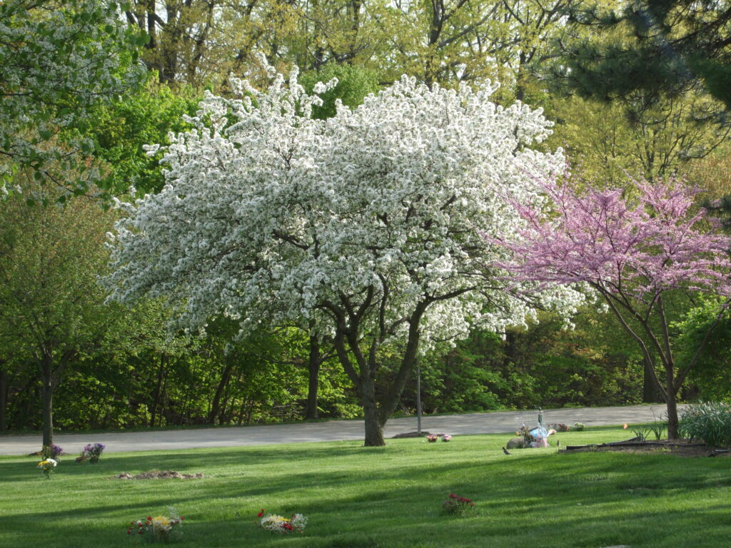 Section 16 – Spring Blooms