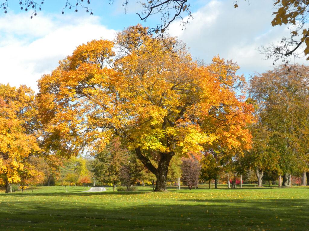 Fall Foliage Section 5